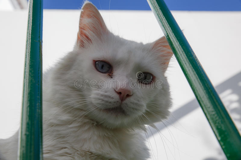 Feline look White cat with blue eyes. Green stock images