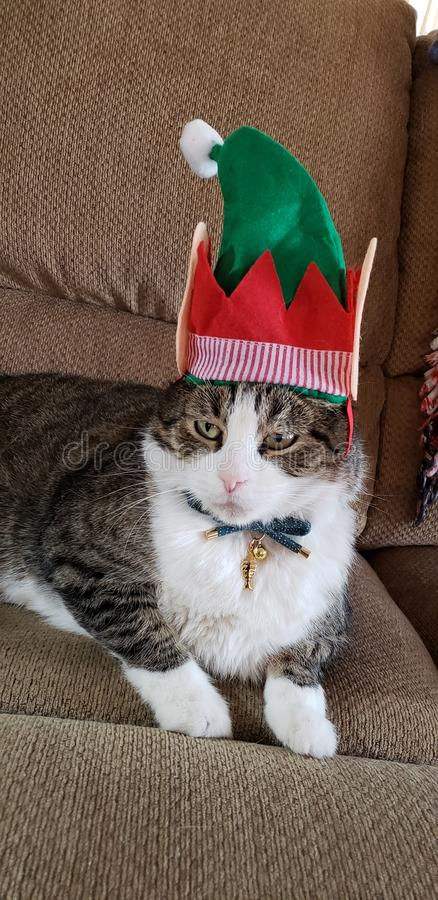 Felino en sombrero de la Navidad del duende imágenes de archivo libres de regalías