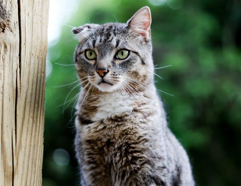 Felix katten arkivfoto