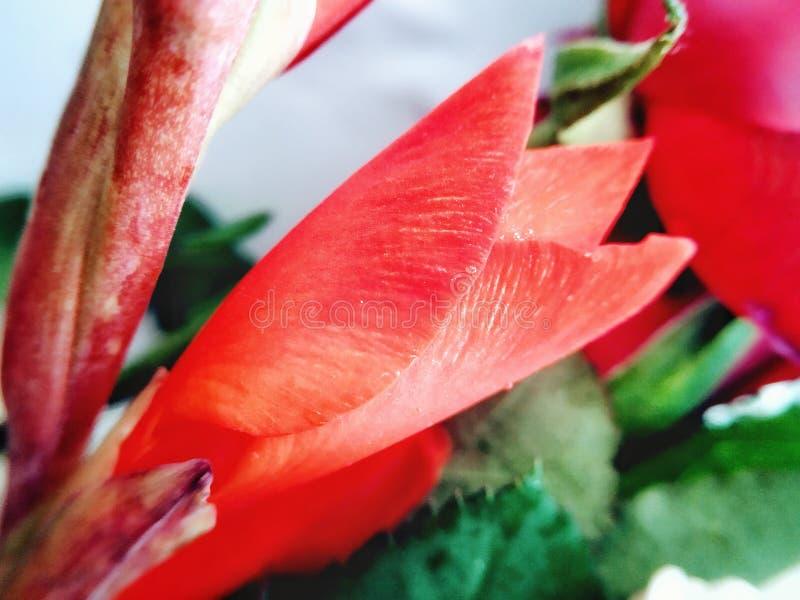 Feliz Año Nuevo 2020 Flores frescas que comienzan la simetría creativa textura patrón simetría Fibonacci rythem fotografía de archivo