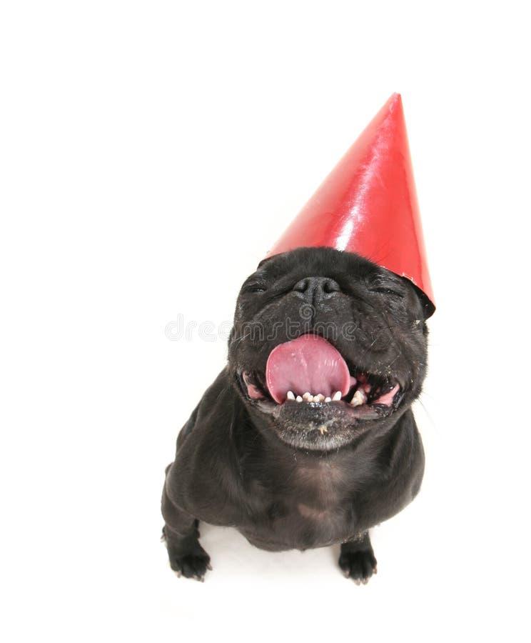 Download Feliz aniversario! imagem de stock. Imagem de mamífero - 16862703