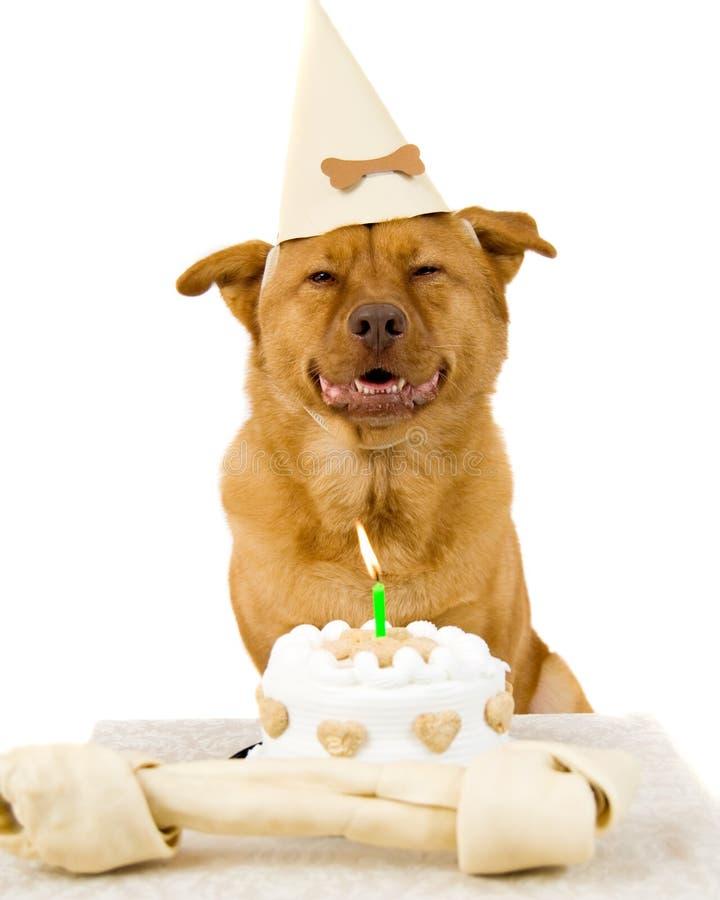 Feliz aniversario do cão fotografia de stock