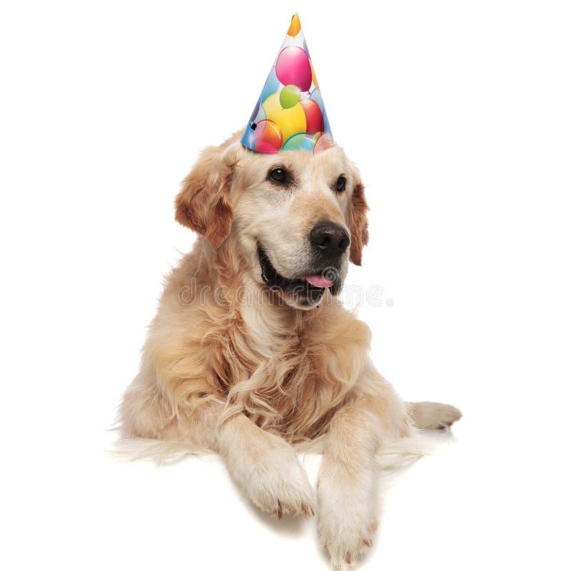 Feliz aniversario Labrador com as patas que penduram olhares ao lado imagens de stock