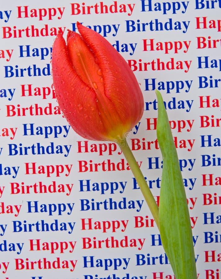 Feliz cumpleaños: un mensaje especial con un tulipán. fotografía de archivo libre de regalías