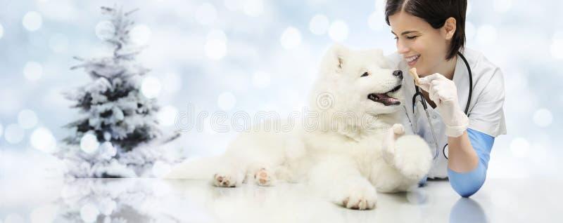 Feliz Navidad de veterinario, clínica del veterinario con el veterinario imagen de archivo libre de regalías