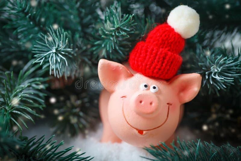 Feliz Navidad y Feliz Año Nuevo Cerdo del juguete en las ramas de la picea Fondo con el espacio de la copia Foco selectivo fotos de archivo libres de regalías