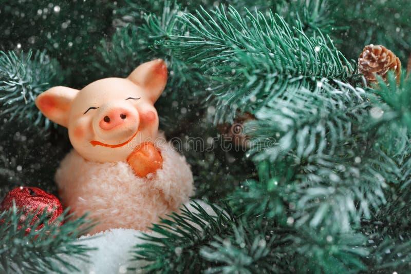 Feliz Navidad y Feliz Año Nuevo Cerdo del juguete en las ramas de la picea Fondo con el espacio de la copia Foco selectivo fotografía de archivo