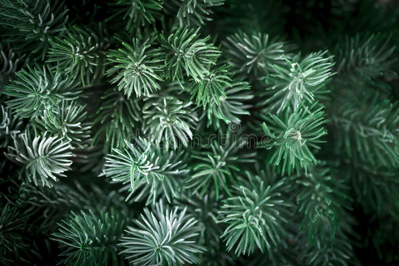 Feliz Navidad y Feliz Año Nuevo La textura de las ramas de árbol de abeto Fondo con el espacio de la copia Foco selectivo fotos de archivo