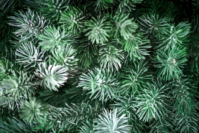 Feliz Navidad y Feliz Año Nuevo La textura de las ramas de árbol de abeto Fondo con el espacio de la copia Foco selectivo foto de archivo libre de regalías