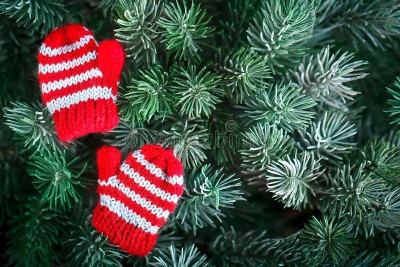Feliz Navidad y Feliz Año Nuevo Pequeñas manoplas hechas punto en el árbol de navidad Fondo con el espacio de la copia fotografía de archivo libre de regalías