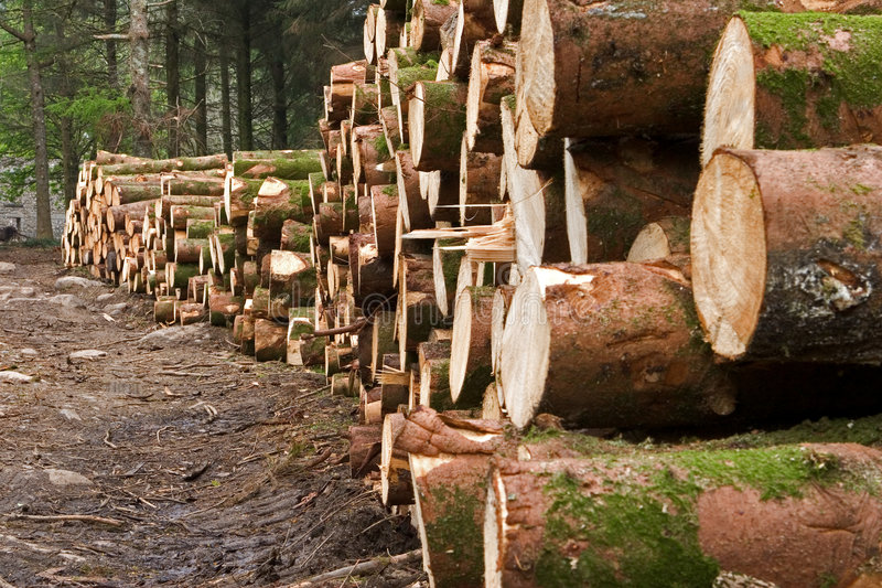 Download Felled pine trees stock photo. Image of industrial, logs - 2690326