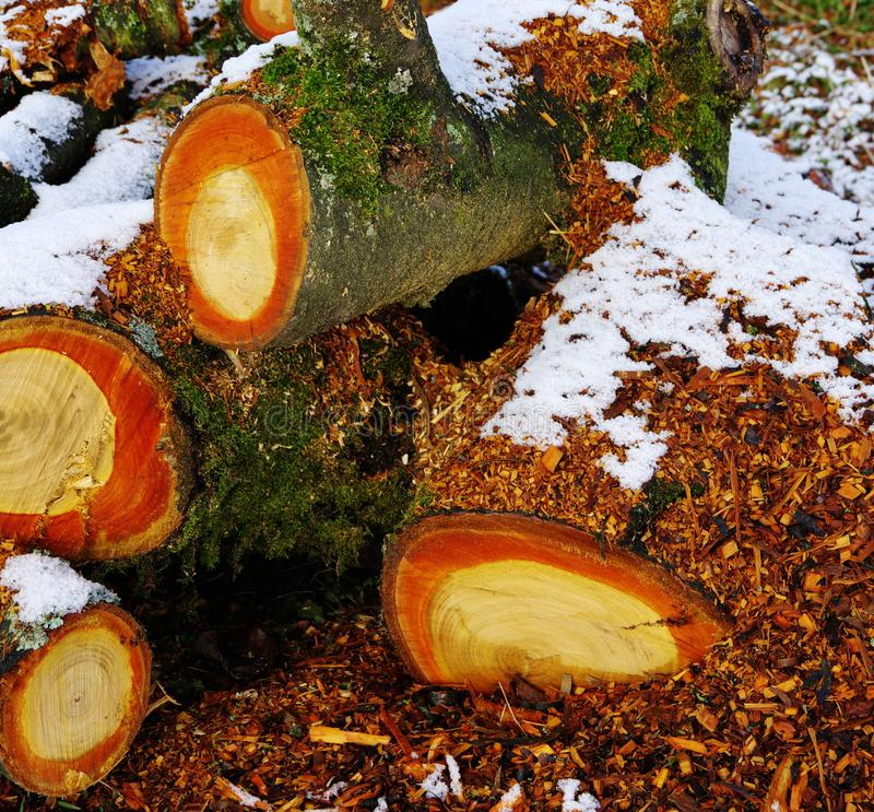 Felled and sawn tree with snow royalty free stock images