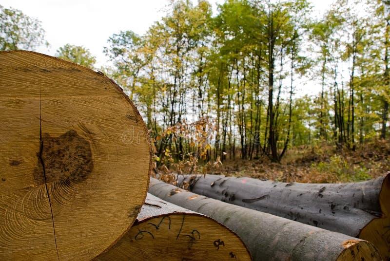 Felled timber stock photos