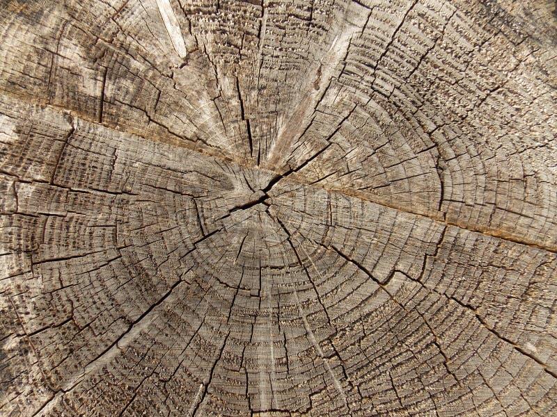 felled tree στοκ φωτογραφίες