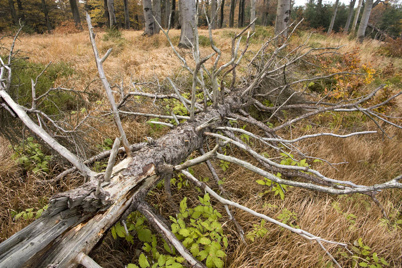 Download Felled tree in the forest stock image. Image of logger - 23875561