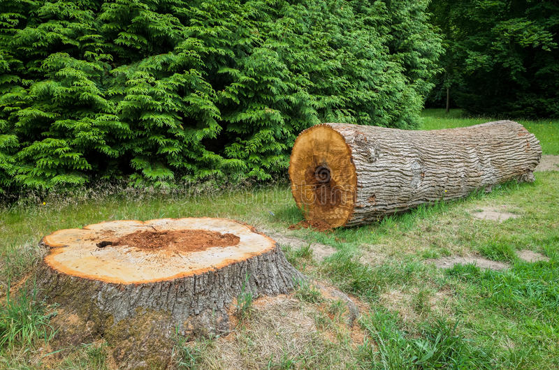 Felled Tree stock photography