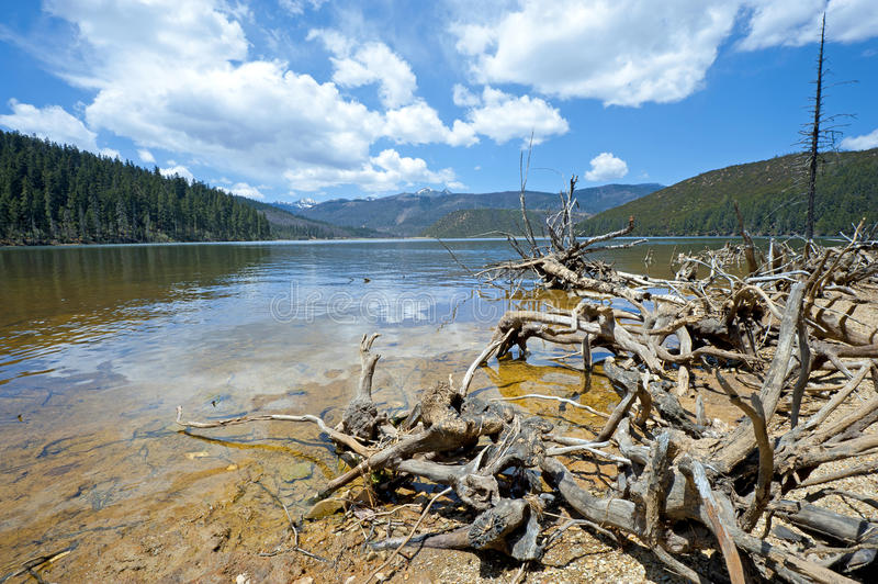 Felled trees in front of National Lake Pudacuo royalty free stock images