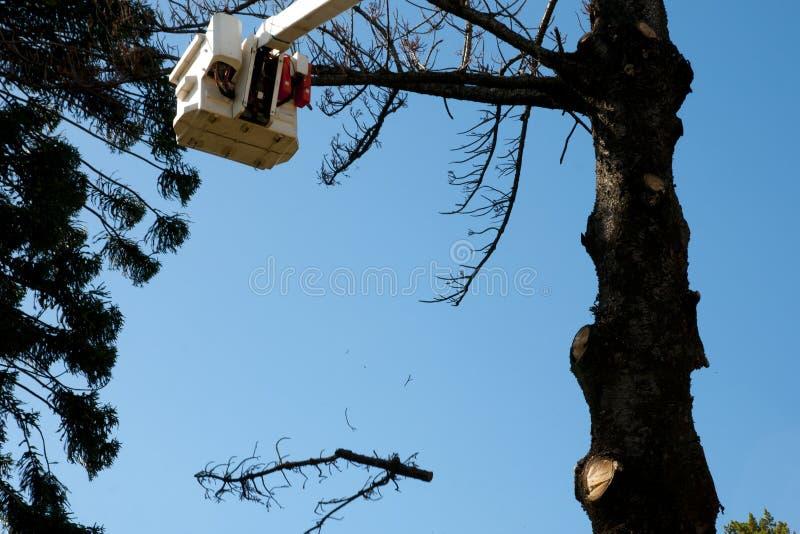 Felling da árvore imagem de stock