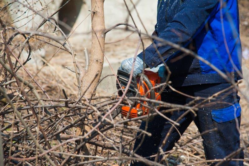 Felling da árvore com uma grande serra de cadeia fotos de stock