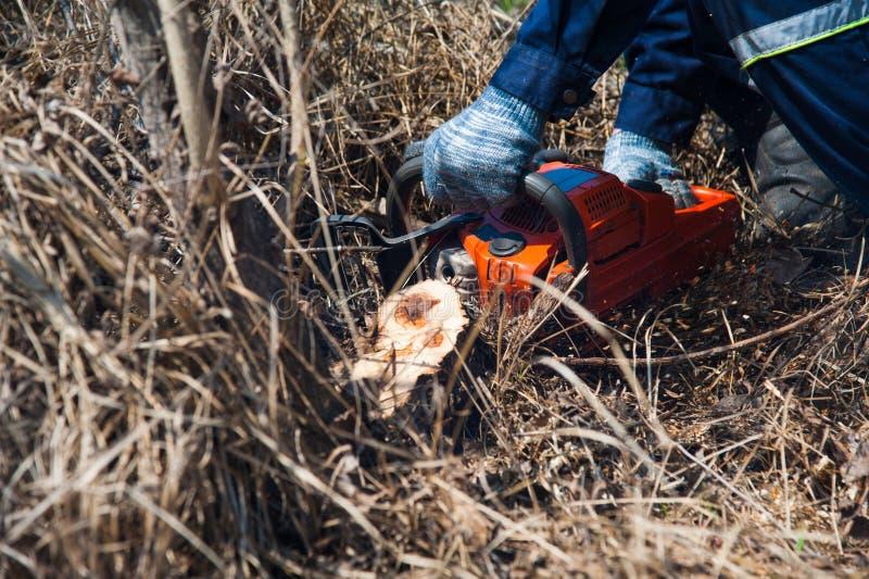 Felling da árvore com uma grande serra de cadeia foto de stock