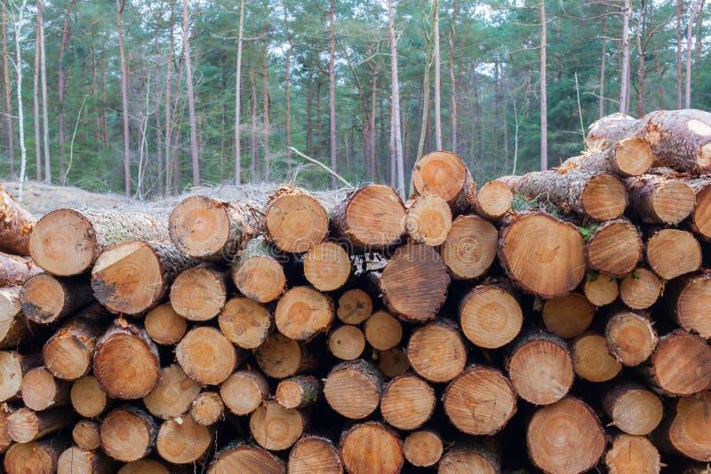 Felling da árvore da indústria da silvicultura fotografia de stock