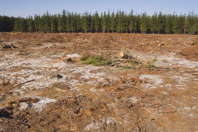 Felling da árvore em uma floresta imagens de stock