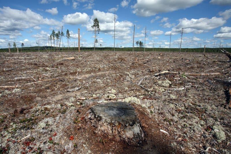 Felling da floresta da destruição da floresta natural, nort imagem de stock royalty free