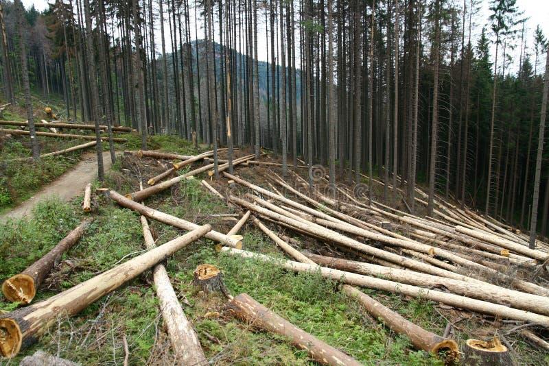 Felling de madeira fotos de stock