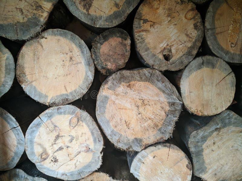 Felling of a tree, log, firewood. Lumberjack. Background of wood. Sawn pine. Natural tree bark. Background of hewed smooth wooden. Felling of a tree, log royalty free stock images