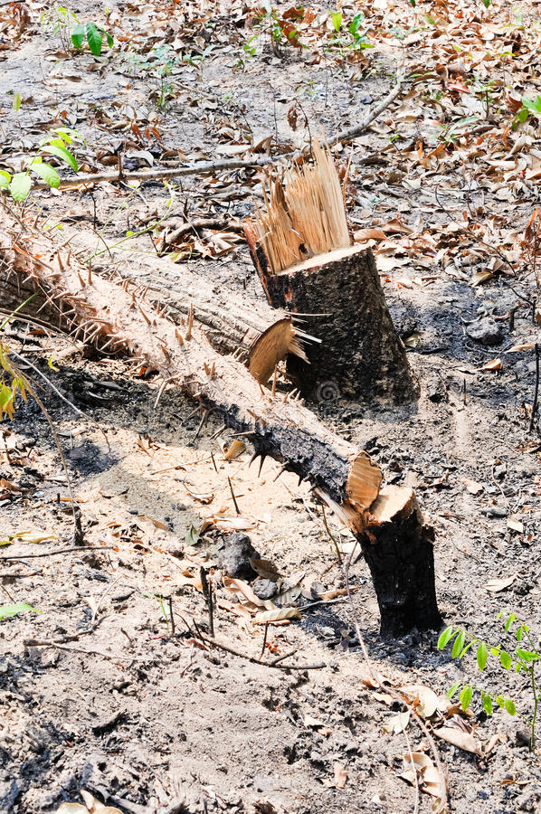 The felling of trees stock image