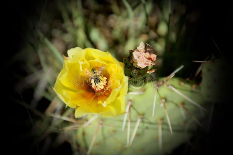Fels liv - en Hoverflys Pollenfest arkivfoton