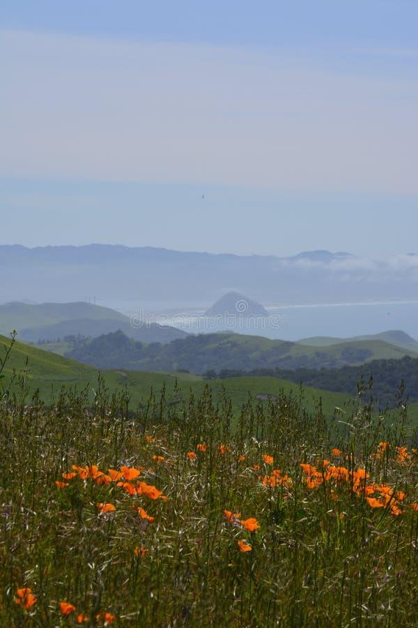 Felsen-Ansicht der wilden Blumen-HWY 46W Morro stockfotografie
