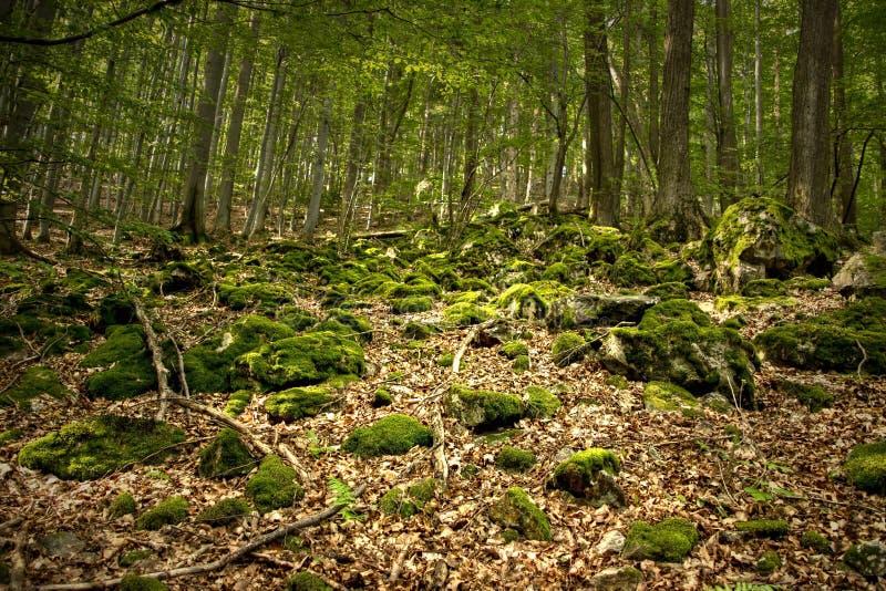 Felsen bedeckt durch Bryophyte stockbilder