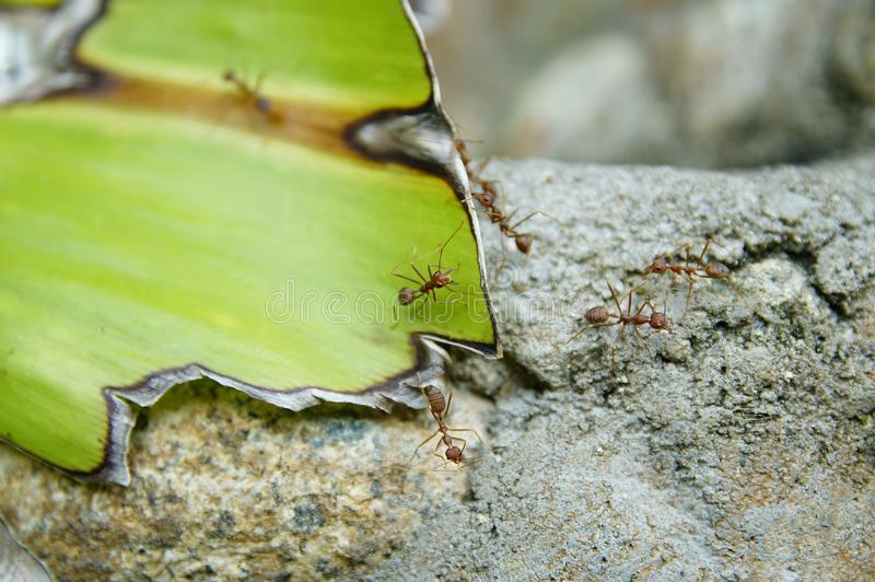 Felsen, Blatt und eine Ameise stockbilder