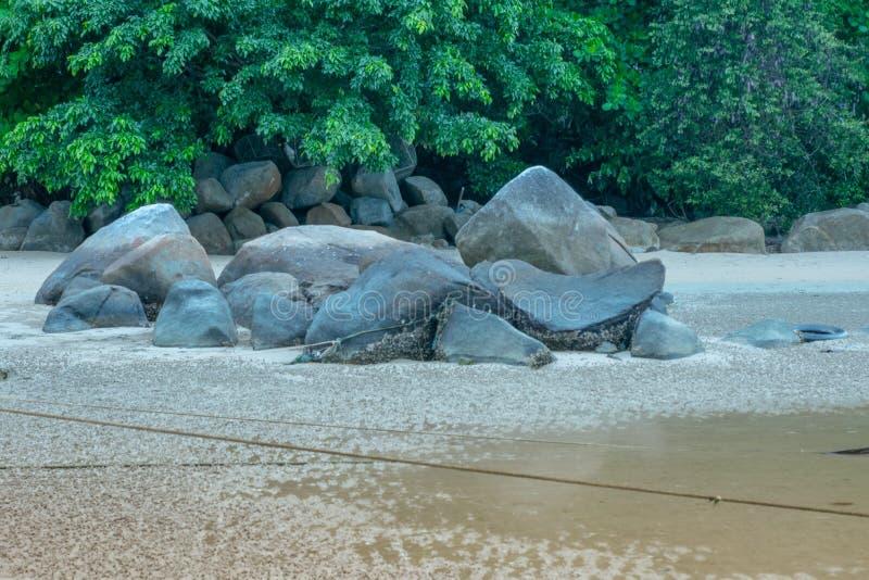 Felsen, grüne Blätter auf dem Strand stockfotografie