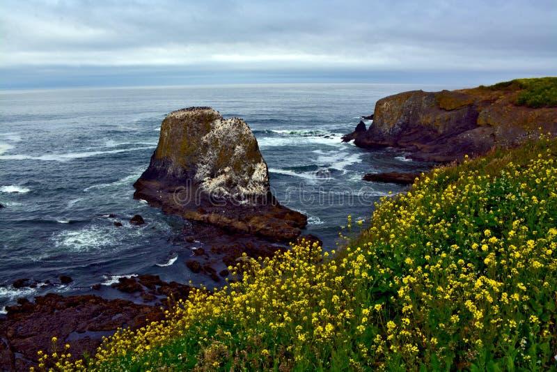 Felsen-Oregon-Küstenlinie lizenzfreie stockfotografie