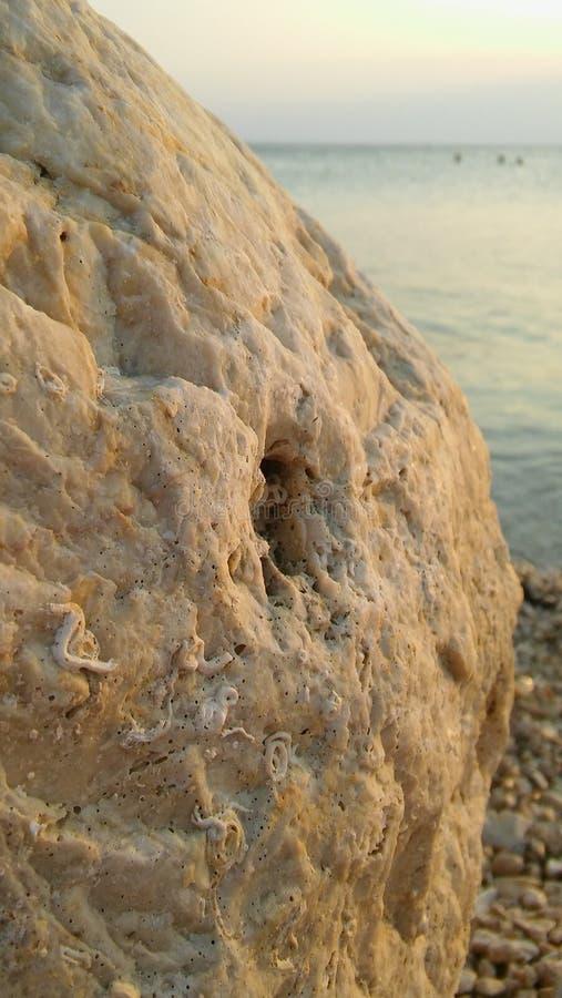 Felsen-Struktur durch den Strand mit Fossilien lizenzfreie stockbilder