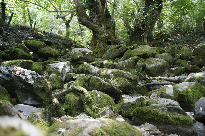Felsen und Bäume im Holz lizenzfreie stockbilder