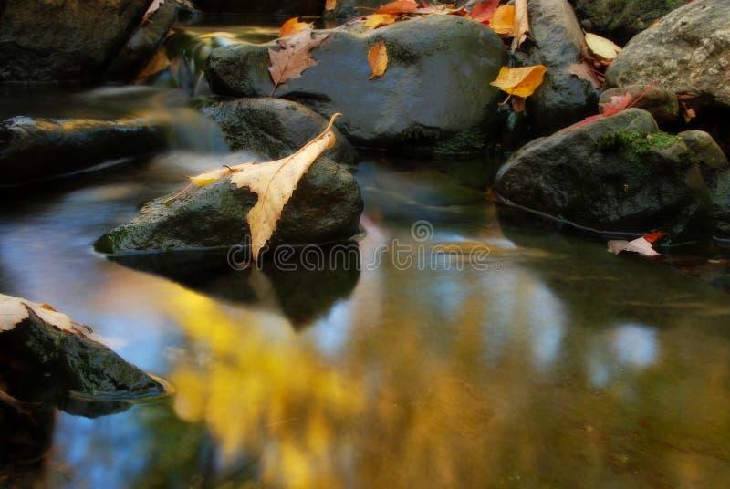 Felsen und Fallblätter im Nebenfluss stockfotografie
