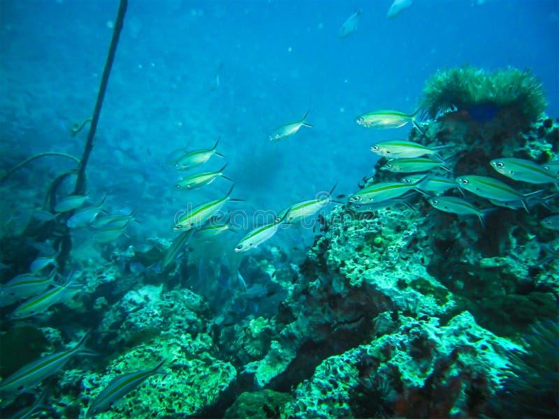 Felsen und Fische und Korallenlandschaft in den Meereswellen wässern in thailändischem lizenzfreies stockbild