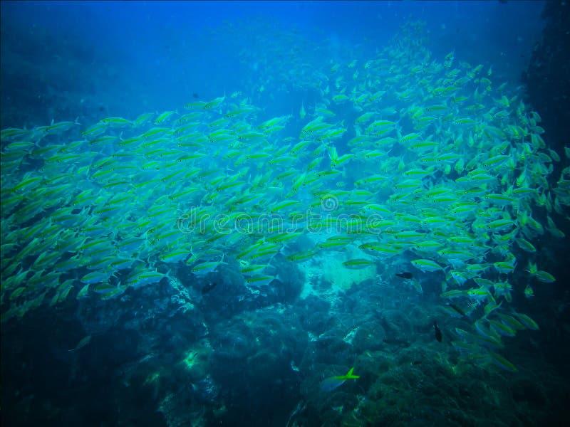 Felsen und Fische und Korallenlandschaft in den Meereswellen wässern in thailändischem stockfotografie