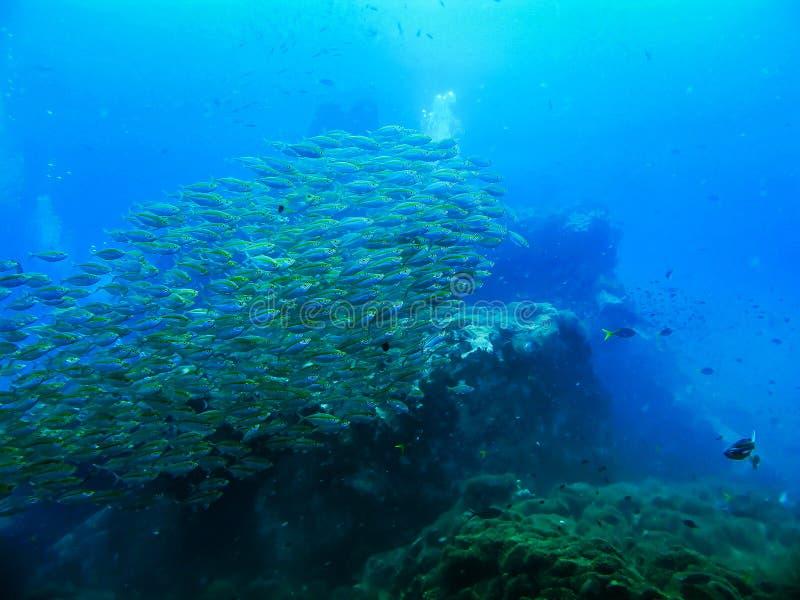 Felsen und Fische und Korallenlandschaft in den Meereswellen wässern in thailändischem lizenzfreie stockfotos