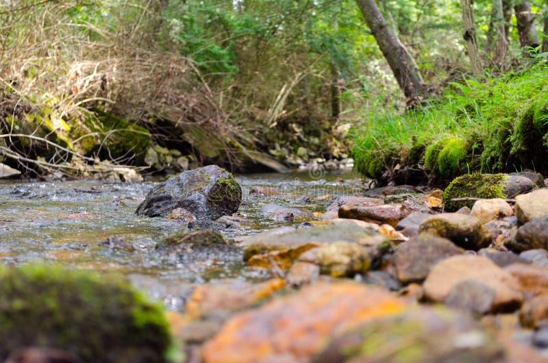 Felsenflussszene im Wald stockfotos