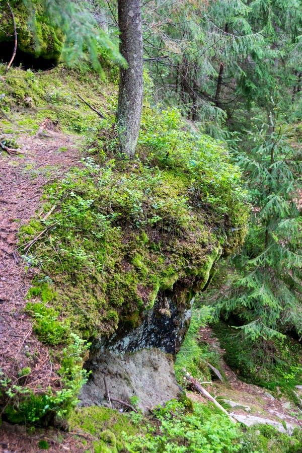 Felsenspur im Wald lizenzfreie stockbilder