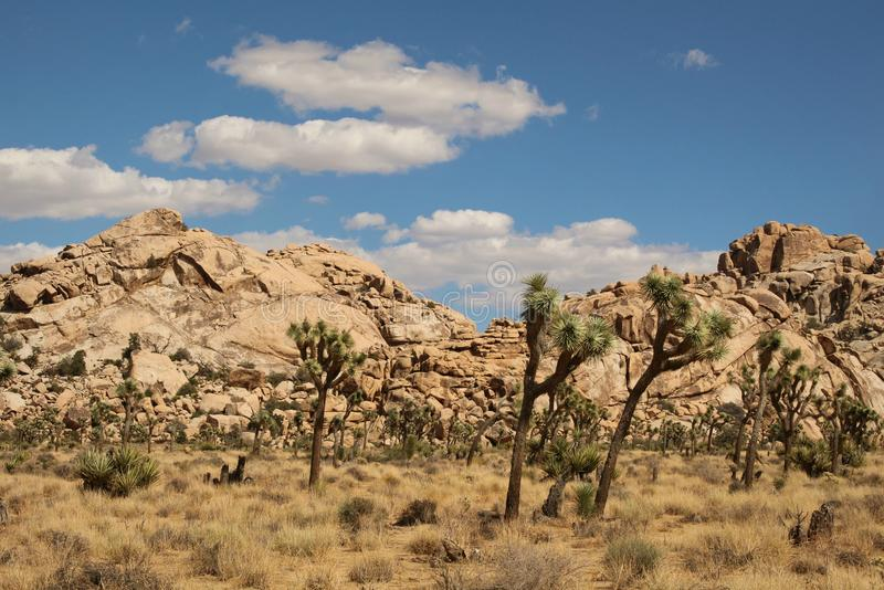 Felsformationen bei Joshua Tree National Park, Kalifornien lizenzfreies stockfoto