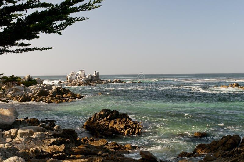 Felsige Küstenlinie Monterey stockfoto