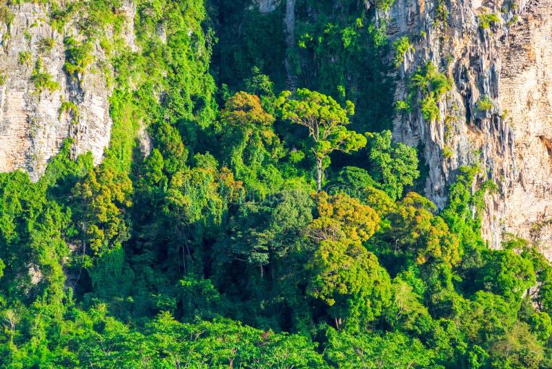 Felsige Klippe mit dem Wachsen von tropischen Bäumen stockfotografie
