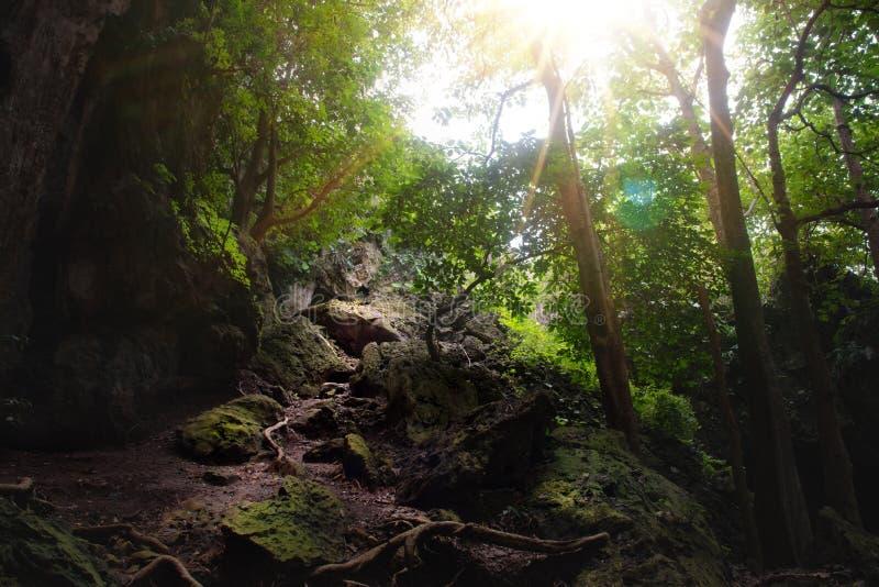 Felsige Straßenbahnfülle mit Sonnenlicht mitten in dichter Wald-/Dschungelabdeckung mit hohem Baum stockfotografie
