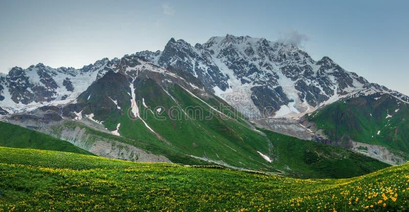 Felsiger Berg Snowy und grasartige Wiese des Sommers in Svaneti, Georgia Landschafts-Kaukasus lizenzfreie stockfotografie