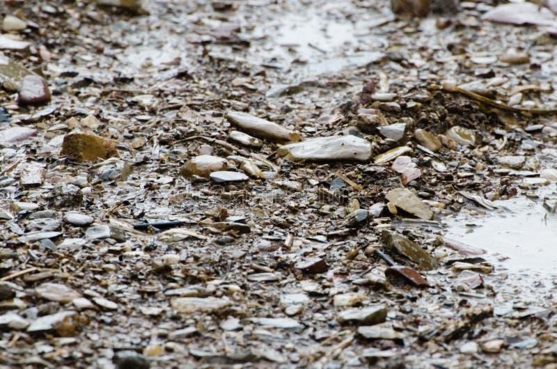 Felsiger boden na stockbild bild von dekoration for Boden nass aufnehmen